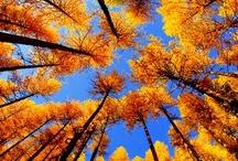 Autumn  / by Cynde Green