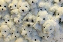 Maltese, Schnoodles, & Puppies...oh my!!!♡ / Mostly Maltese & other adorable animals and dogs / by Adriana Benavidez