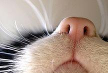 Feline grace / Она всегда была немного кошкой...  Она любила спать и молоко,  И под перчаткой каждая ладошка  Скрывала пять изящных коготков. / by Anna Bondarenko