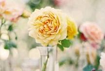 Phenomenal Photography / Beautiful, professional photography of flowers.