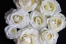 Flower Identification / Flower Identification