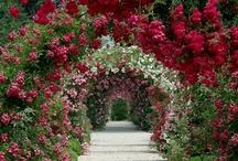 Gorgeous Gardens / Gorgeous flower gardens from around the world.
