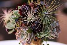 Succulents & Such..
