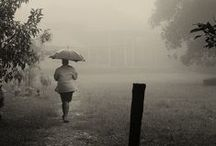Misty / Foggy days have a mystical quality about them, as if the everyday is suspended and replaced with a fantasy world