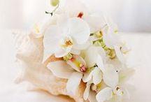 Wedding / by Amanda Csoka
