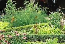 Permaculture / Permaculture and organic gardening