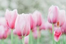 Spring / by Nad.G☙