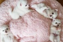 {Cute Animals}