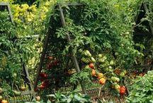 garden / by Lynn Crowder