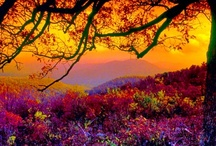 more pretty places / by Sue Lassman