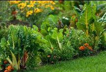 Garden & Permaculture