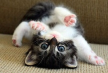 Really Cute Animals / by Jessica McHie