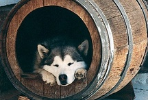 In The Doghouse / by Marly Arsenault