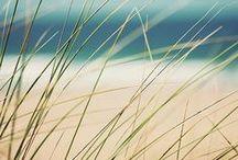 Ocean Palettes