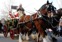 Holidays in Loudoun County / There's nowhere more magnificent to spend your holiday season than Loudoun County VA. From snow-topped steeples to horse-drawn carriages, you can make magic happen here. #loudounholidays / by Visit Loudoun
