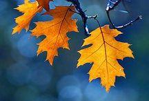 Autumn  •˚