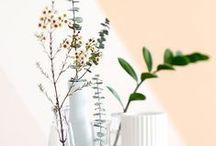 b o t a n i c a l / Flower, Plants, Dry Flower
