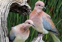 Birds - Doves, Pigeons / by Rose Martin