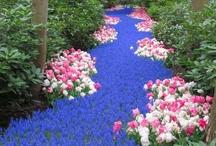 Gardening Ideas / by Shanna Dayton