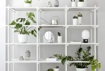 details // plants / House plants and how to decorate with them.