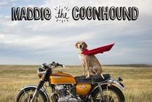 Maddie on things / Maddie the Coonhound on things / by Flo Renz