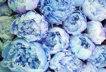 color; blue
