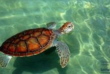Cayman Naturally