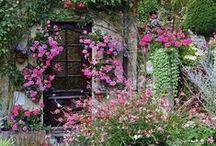 Gardens & Flowers / by Shelli Smith