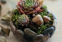Indoor Gardening / We're deep in succulove with succulents, cactuses, and other indoor plant!