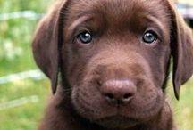 Puppy Love / by Kim Zimmer