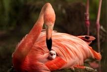 Birds / by Gay Riipinen