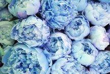 blue / by Ashley Manicor
