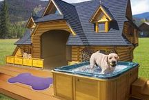 Pampered Pup / Great products & tips to pamper your 4-legged furry children / by Lori