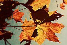Fall's magic