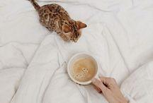 {breakfast in bed}