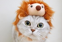 Cute kittys
