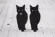Cats, Kittens & Felines / by Tiffany LW