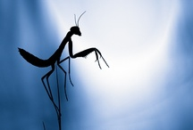 Insectos / by Paco Castillo