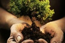 bonsai / by Nancy Clark