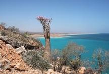 Socotra & Sanaa, Yemen / April 2013 - thanks Bruno & Iaia