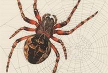 Arachnids / Spider, Tarantula, Scorpion