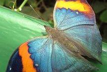 Butterfly Addict ❤ Dragonfly/Moth / by Mamunia*
