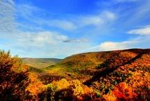 Fall Fun / by Laurel Highlands