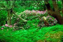 Nature / Jardines de Andalucía