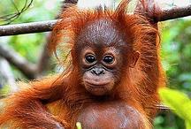 Wildlife of Borneo