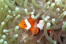 Underwater Borneo
