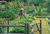 Gardening: Vegetables & Fruits