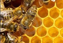 Grits Haven Farm Honey