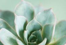 MINT / #mint #mintchip #art #green #pastel #inspiration #photography