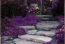 """Backyard""igans / by Jill Myers"